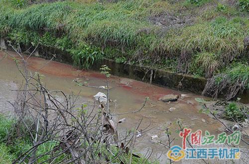 河渠水面上漂浮的红色物质