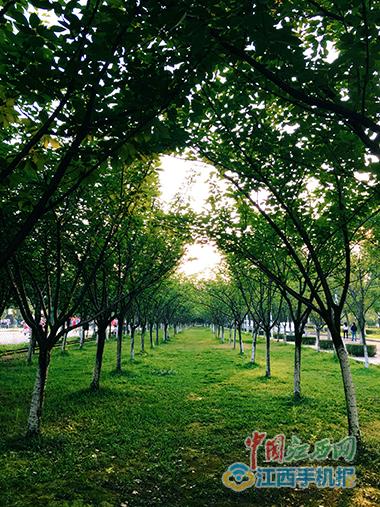 绿荫深处葱郁炫目