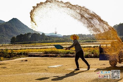 用汗水描绘金色的田野