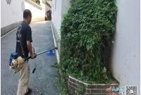 珠山区太白园街道浙江路社区修剪树枝消隐患(图)